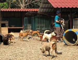 Vaikka isolla tarhan pihalla on paljon koiria samalla alueella, on monilla koirilla silti tietyt alueet joilla oleskelevat ja koirat on toisinaan paras kantaen viedä omalla alueelleen. Erillisten aitauksien koiria pitää jatkuvasti kantaa läpi pihan, siten vapaaehtoistyö on hyvin fyysistä.