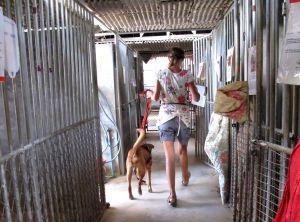 Vapaaehtoinen viemässä koiraa ulkoilutukseen Lanta Animal Welfaren keskuksessa. Siellä työt vaikuttivat selkeästi organisoiduilta ja pitkäaikaisille vapaaehtoisille tarjottiin majoitusta.