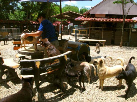 Tarhalla on monia paikkoja, joissa koiria voi hoitaa eli istahtaa alas ja etsiä punkkeja, puhdistaa korvia, harjata, leikata kynsiä ja muuten vain viettää aikaa. Tällä kohdalla työntekijät myös päivittäin jakavat lääkkeet lääkityksessä oleville.