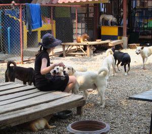 Turvatarhan koirille on hyvin tärkeää saada ihmiskontaktia. Ensinnäkin useimmat koirat kaipaavat ihmisseuraa ja hyvittelyä. Toiseksi koirat saavat paremmat mahdollisuudet tulla adoptoiduiksi jos ne ovat hyvin ihmisrakkaista ja etenkin jos niitä on helppo käsitellä.
