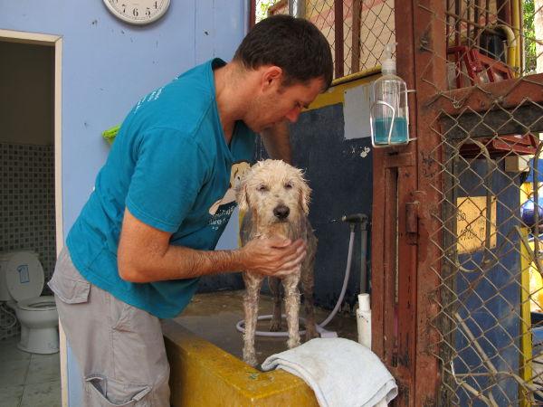 Vapaaehtoisten hommiin kuuluu koirien peseminen. Monet koirat tarvitsevat säännöllisiä lääkekylpyjä ihosairauksiinsa.