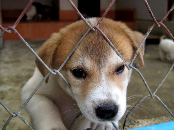 Pentu Care for Dogsin turvatarhalla huhtikuussa.