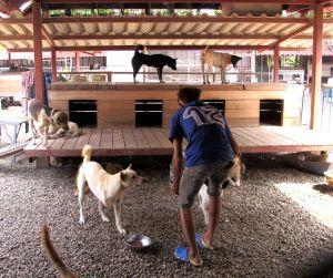Yksi työntekijöistä jakamassa koirille ruokakuppeja. Tuohon työhön itse en juuri osallistunut, koska työntekijät saivat sen aikaiseksi. Itse lähinnä yritin vahtia saavatko kaikki koirat syödäkseen.