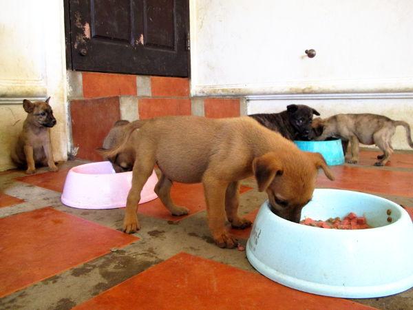 Toukokuussa tarhalle tuotiin seitsemän hyvin arkaa koiranpentua, jotka piti saada totutettua ihmisiin. Vapaaehtoisten hommiin kuului istua koirien luona, totuttaa ne kuulemaan puhetta ja saada luottamaan ihmisiin. Keinoja oli ruoan ja herkkujen tuominen niille, leikkiminen ja rapsuttelu.