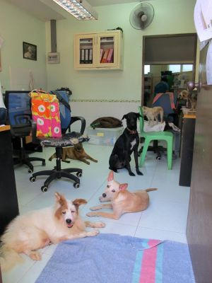 Jotkut koirat oleskelivat pidempi- tai lyhytaikaisemmin keskuksen respa-alueella ja toimistossa.