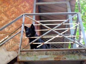 Time for Limessa vapaaehtoistyöntekijöille oli tarjolla majoitus tällaisissa rakennuksissa samassa joidenkin palkattujen thaityöntekijöiden ja muutamien kodittomien koirien kanssa.