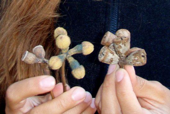 Nämä ovat käsittääkseni eukalyptyksen siemenkotia. Nykyään niitä löytyy muualtakin kuin Australiasta, kun eucalyptusta on alettu kasvattamaan. Tämä kuva on Australian Philip Islandilta.