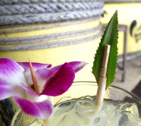 Kiva agaven lehden päästä ja syömäpuikosta tehty juomansekoitustikku.