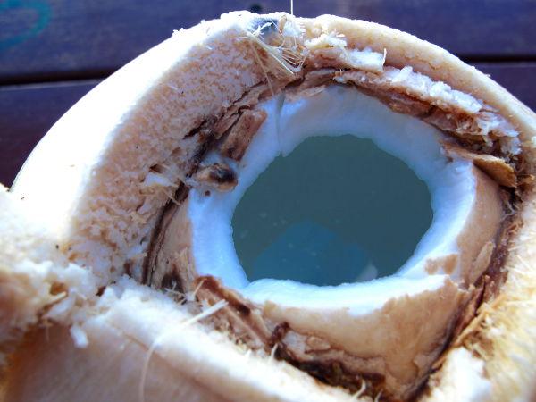 Juotavat kookospähkinät ovat nuoria, jolloin niissä on mahdollisimman paljon kirkasta kookosvettä sisällä. Nuorissa kookoksissa valkoista mietoa kookosmaltoa eli kookoslihaa on sisäpinnalla sitä ohuempi ja pehmeämpi kerros mitä nuorempi kookos on. Kookosmaito tehdään sekoittamalla vettä ja vanhan kookoksen kovaa kookoslihaa. Eli kookospähkinän sisällä ei ole valmista nestemäistä valkoista kookosmaitoa, vaan sitä pitää valmistaa yksinkertaisella menetelmällä.