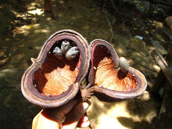Isot siemenkodat Koh Phi Phillä Thaimaassa.