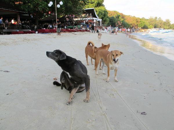 Koiria rannalla.