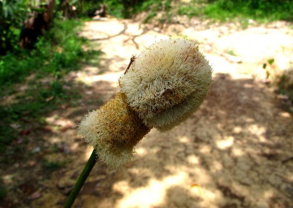 Höytyväinen kasvi Koh Phi Phillä Thaimaassa.