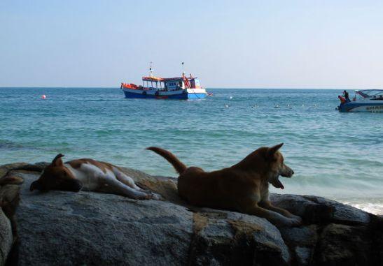 Ihanat koirat rantakivillä.