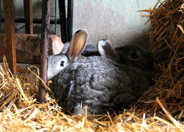 Kaksi pupua Tuulispään viidestä kanista.