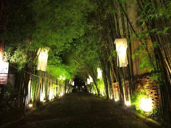 Johonkin toiseen chiangmailaiseen hotelliin johtava bambukuja.