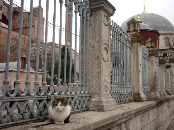 Kissa Hagia Sofian muurilla.