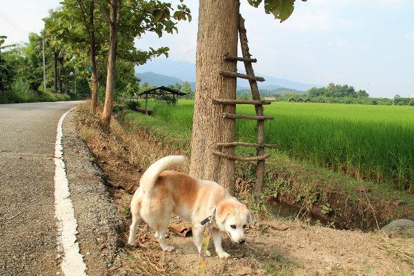 Tarhan vieressä on tällaiset maisemat. Pitkin päivää tulee ulkoilutettua koiria tietä pitkin tai sitten viereisessä metsikössä.