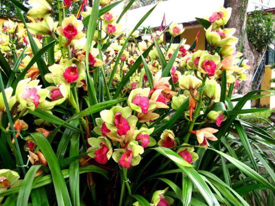 Kukkia Vietnamin Hanoissa.