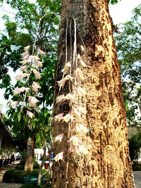 Puun rungosta kasvavat riippuvat kukat Pohjois-Thaimaan Chiang Raissa Wat Rong Khunin temppelillä.