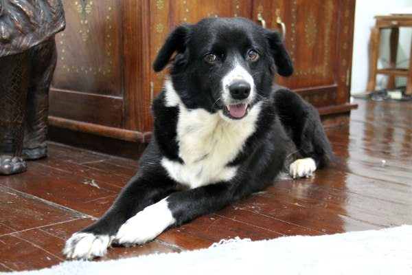 Kaikki hoidokkini ovat  Care for Dogsin turvatarhalta ja nämä kolme onnekasta pääsivät oikeaan kotiin.