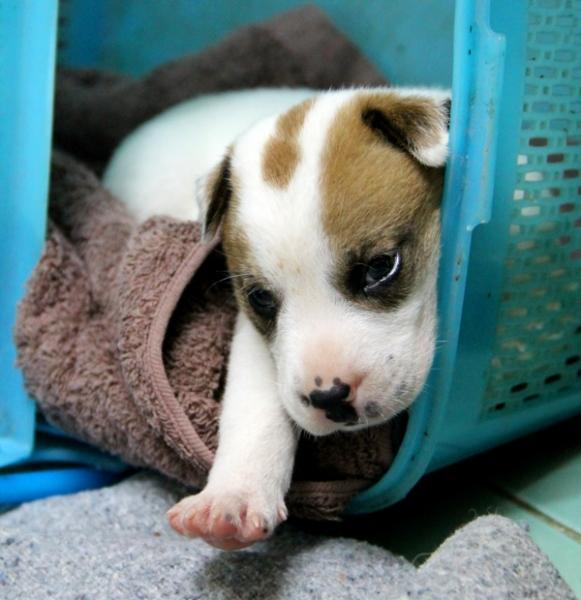 Tämän neliviikkoisen koiranpennun nappasin tänään matkaani Care for Dogsin koiraturvatarhalta. En pystynyt jättämään sitä sinne yöksi yksin häkkiin.