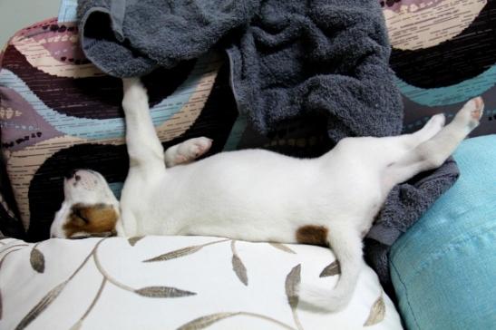 pentu nukkuu sohvalla 1_blogi