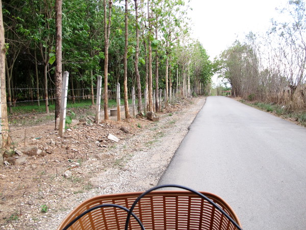 Tietä noin 1 km majapaikastani etelään. Vasemmalla kasvaa kumipuita.