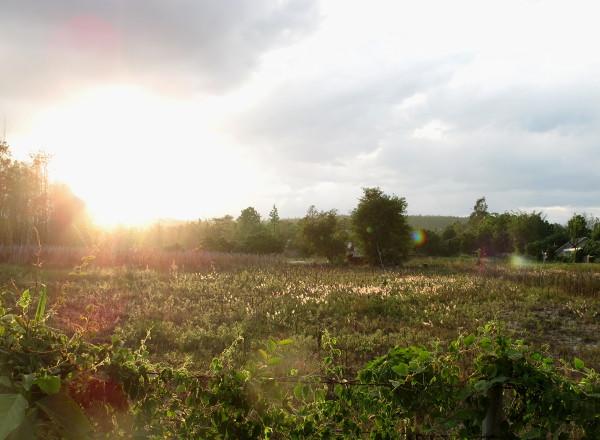 Auringonlaskua niityllä majapaikastani vähän etelään.