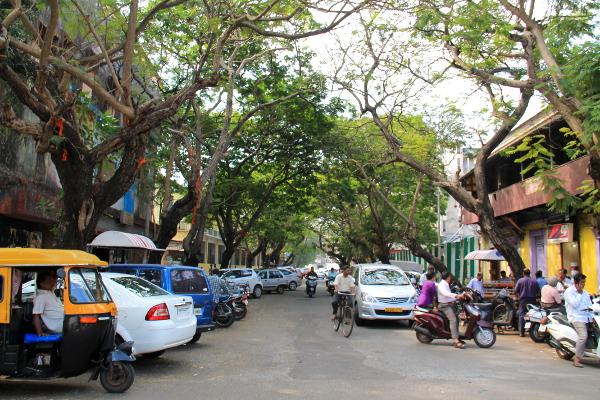 Harvinaisen puistoinen tie Intiassa.