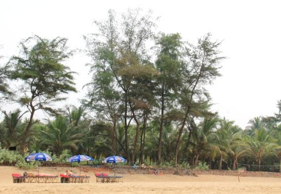 Agondan ranta ei ole Palolemin tapaan täyteen ahdettu, vaan välissä on jopa rakentamatonta puskaa.