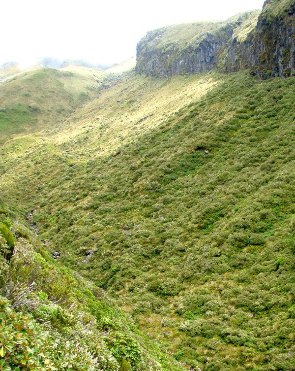 Kanjoni Taranakilla.