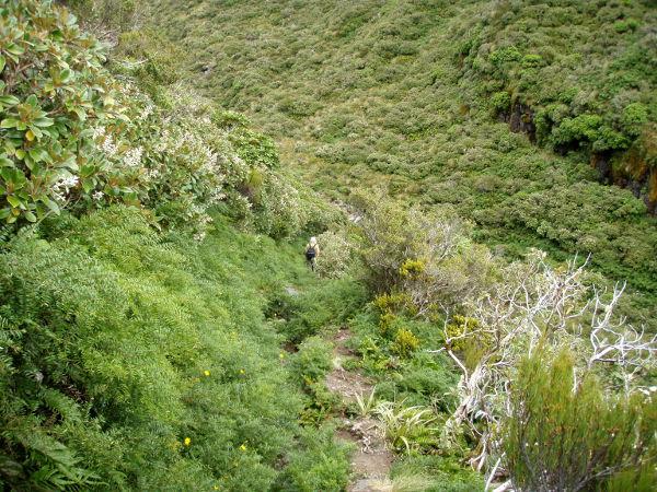 Vuoren polkuja ja maisemia.