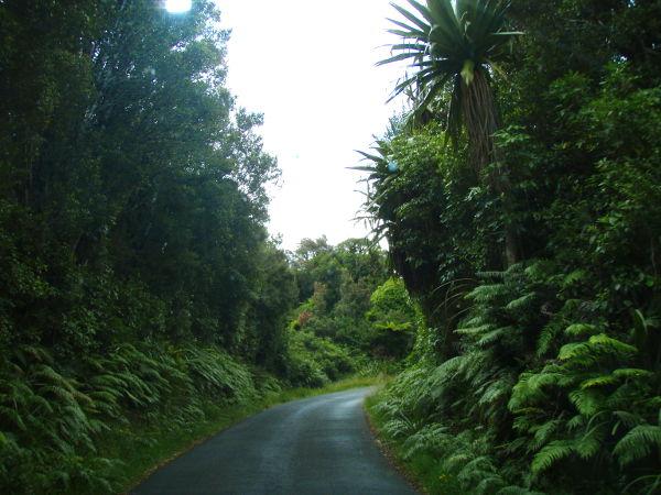 Tie Mount Egmontin kansallispuistokeskukselle, josta saa infoa kävelyreiteistä. Tällaisilla pikkuteillä oli olo että mistä vain voisi tielle putkahtaa kiivilintu, vaan turha toivo.