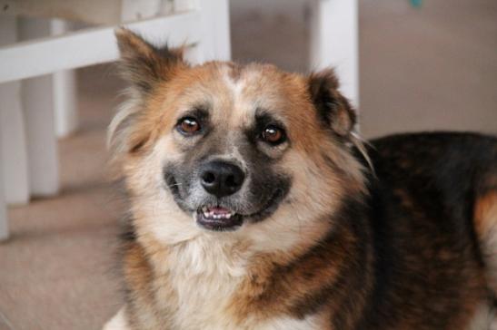 Namon on saanut kodin yli vuosi sitten kun koiratarhan vapaaehtoinen adoptoi sen.