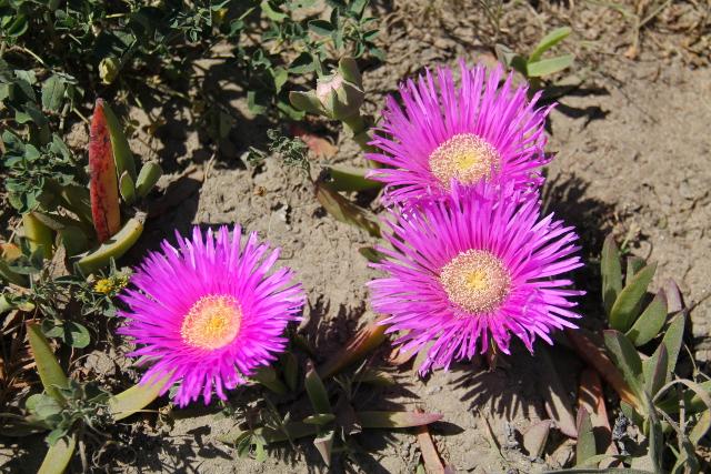 8 kukat