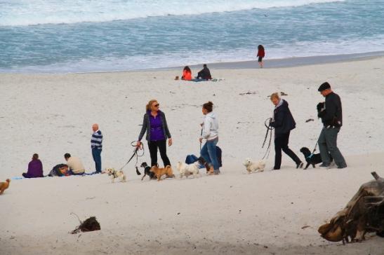 Koiria Carmelin rannalla.
