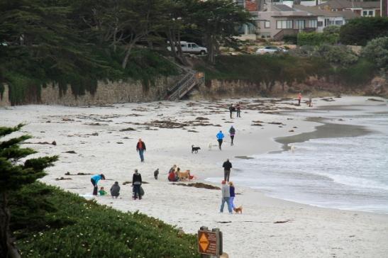 Lisää koiria Carmelin toisella rannalla.