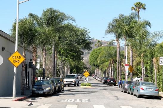 Palmuja on Hollywoodissa kivasti.