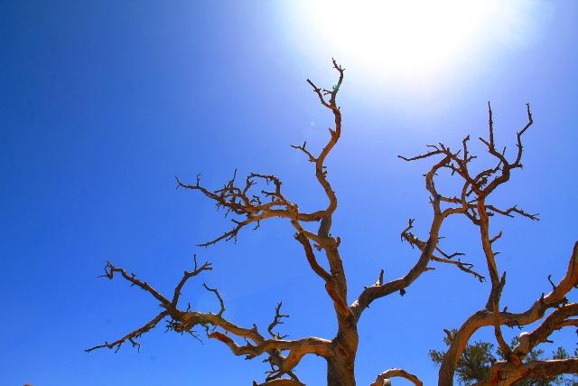 kuiva puu