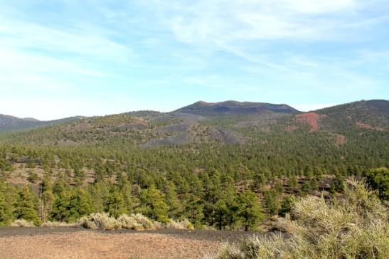Metsämaisemaa läheltä Sunset Crateria.