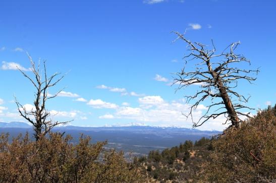 käppyräpuut ja kalliovuoret