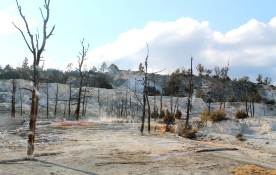 Kuivia puita. Kuumat lähteet vaihtavat joskus paikkaansa ja näköjään puut jäävät sinne kuolleina töröttämään.