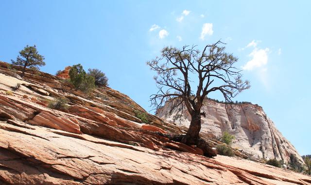 kuiva puu zion_7