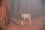 Bambi on kuin maalauksesta.