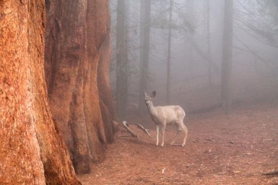 bambi sumuisessa maisemassa