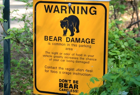 bear damage warning