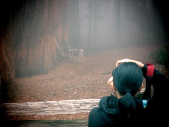 Kameralla tähtääminen on luonnonystävän ainoa tapa tähdätä eläimiä.