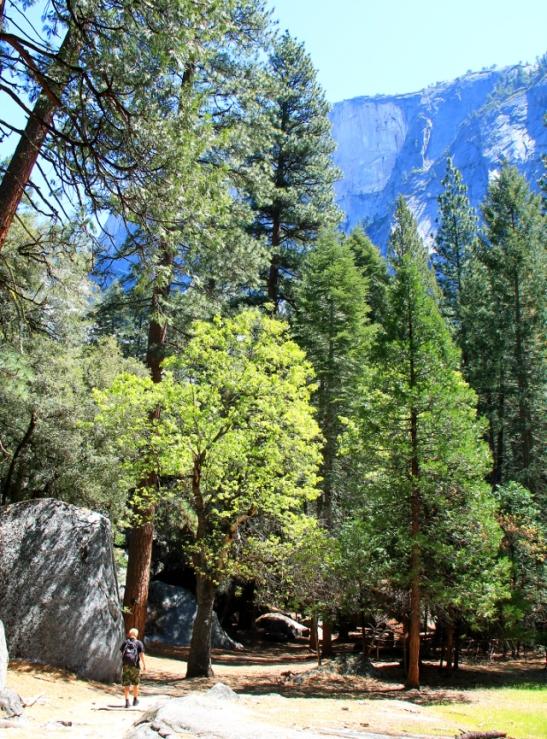 Polku Yosemite Valleyssa, käppäilimme kohti Half Domen juuressa olevaa Mirror Lakea.
