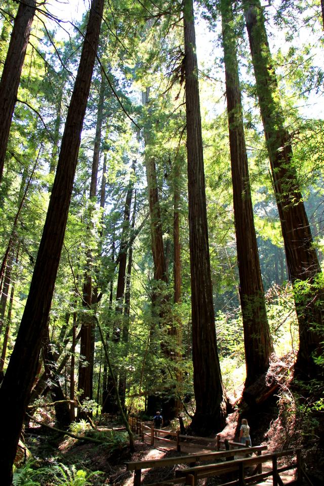 muirin metsää