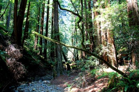 puro ja metsä